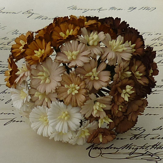 50 MIXED BROWN/WHITE COSMOS DAISIES